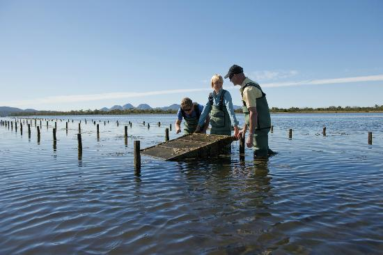 Saffire Freycinet: Freycinet Marine Oyster Farm