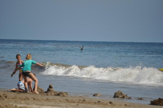 Arroyo Burro County Beach Park: The view from the sand of children playing and swimming and the pelican's diving for a snack. :