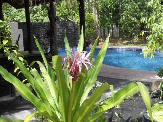 Mayfair Angkor Villa: View to Swimming Pool