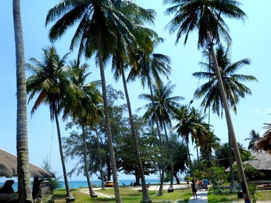 D'Coconut Resort: Very high coconut trees surrounding the resort