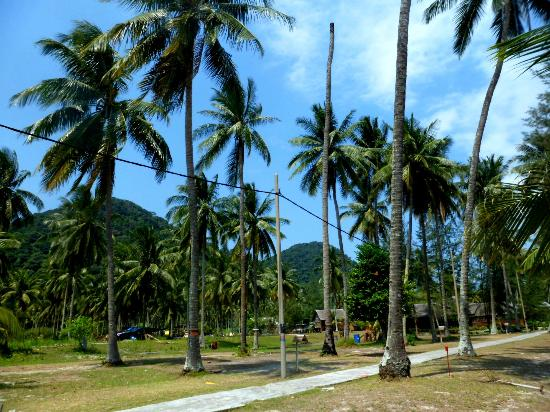 D'Coconut Resort: Resort compound