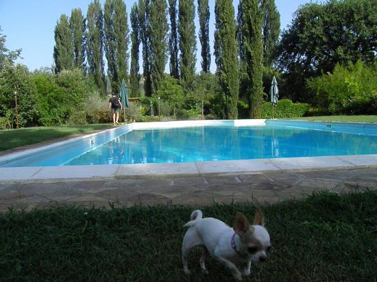 Appartamenti Vacanza La Meridiana: la piscina immersa nel verde
