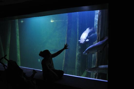 Acuario de Zaragoza: Aquarium Zaragoza
