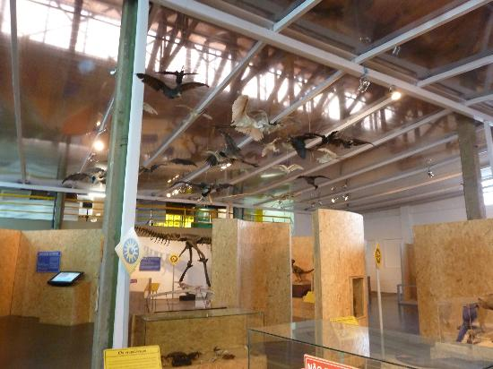 Science Station of the University of Sao Paulo: Tierausstellung