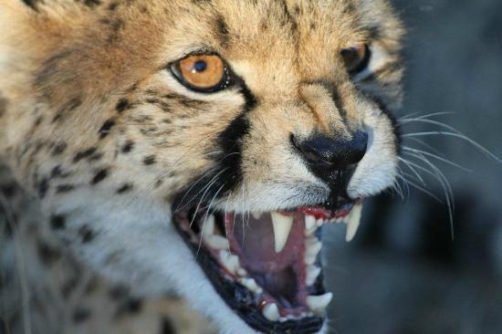 N/a'an ku se Lodge and Wildlife Sanctuary: Local 