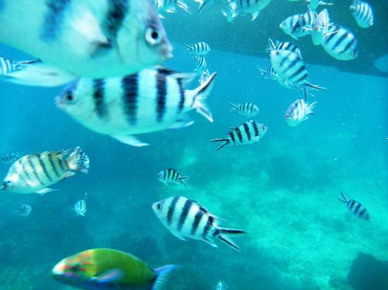 Jamahkiri Resort & Spa : Fish in the bay