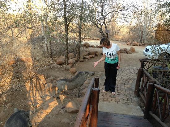 Royale Marlothi Safari Lodge: Melissa feeding the animals