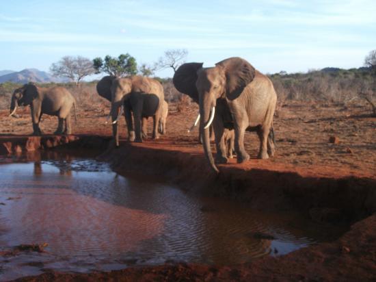 Bianco Nero Safari and Private Day Tours: ....stupendi con il piccolino dietro