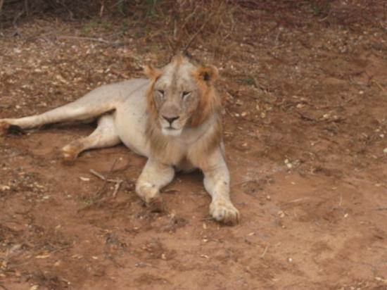 Bianco Nero Safari and Private Day Tours: all'alba alla ricerca di SImba trovati ben 5..