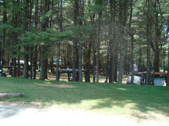 Eastern Slope Camping Area: These are sites in our forest area.