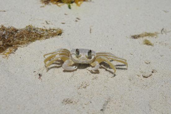 Providenciales: Crab :)