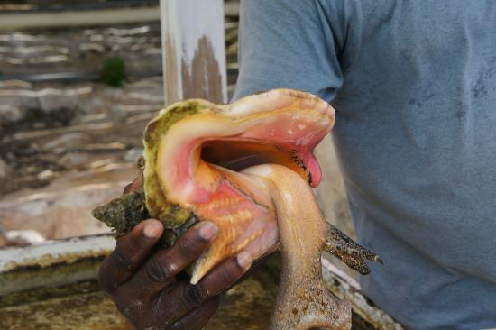 Caicos Conch Farm: Jerry