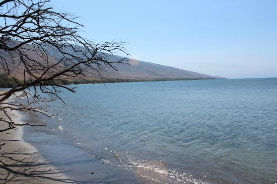 Camp Olowalu: The beach 100 feet from your tent