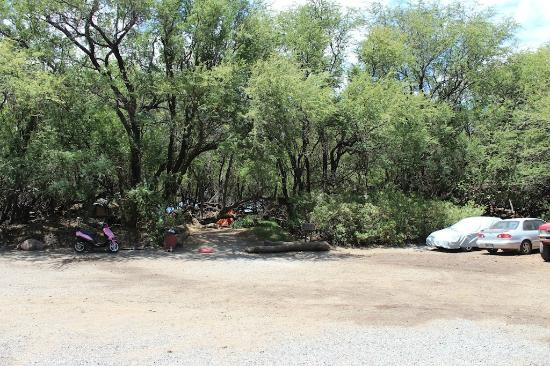 Camp Olowalu: Tent area with  more trees (these sites go fast)