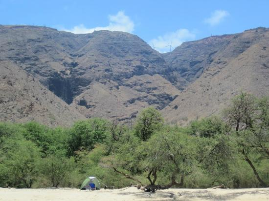 Camp Olowalu: My office for the month