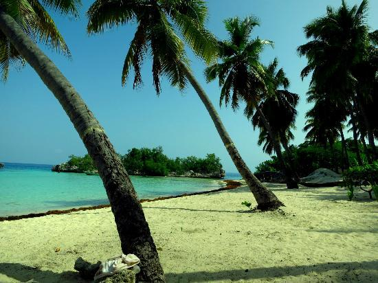 Petit Goave, Haiti: Palms lining the beach