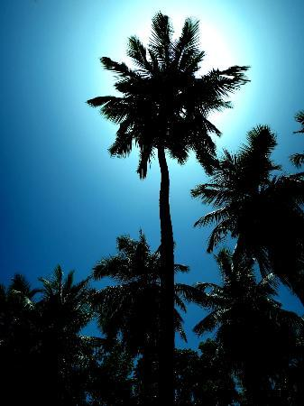 Kokoye Beach: A Palm on Kokoye