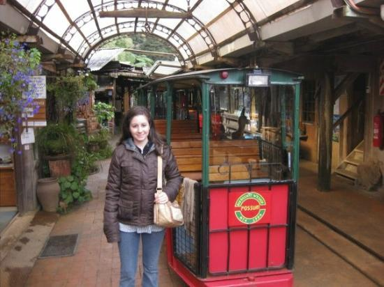 Driving Creek Railway and Potteries照片