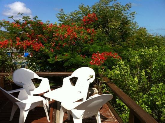 Les Islets Fleuris : un flamboyant en fleurs
