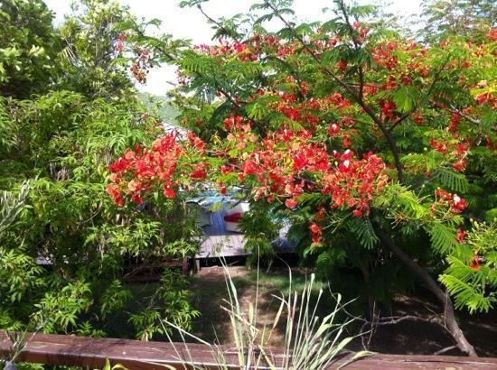 Les Islets Fleuris: le jardin