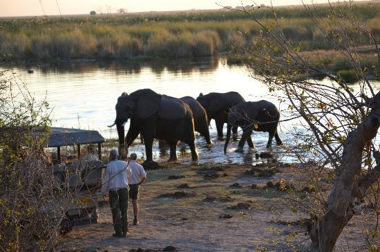 "Elephants and ""Sundowners"" -- Linyanti Bush Camp"