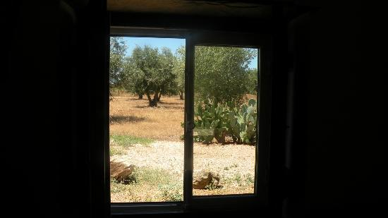 Monte da Fornalha: View from the back window in the room to surrounding cork trees