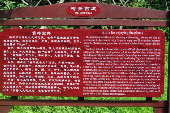 Nanxiong, จีน: Bibel des Pflaumenessens