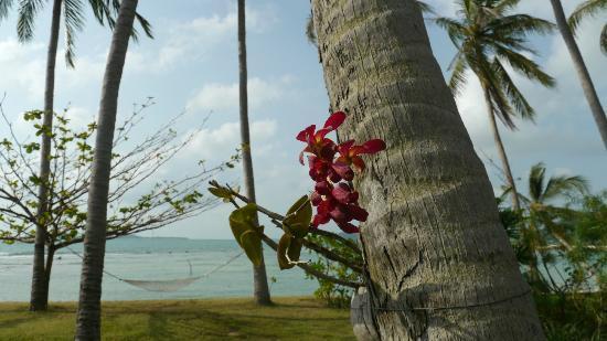 Ban Sairee Villa: Garden during the day.