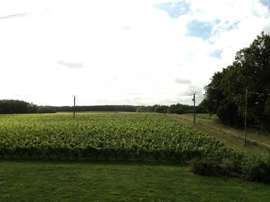 Les Pierres d'Aurele : Our view