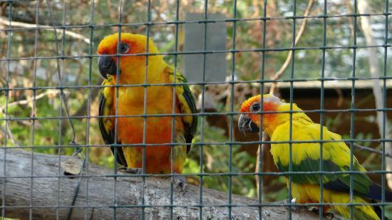 Attica Zoological Park: The beauty of animal life in the Park