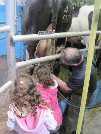 O'Shea's Ceol Na Habhann: Helping with the milking
