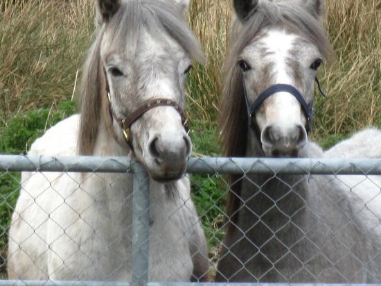 Faul House : The yearlings