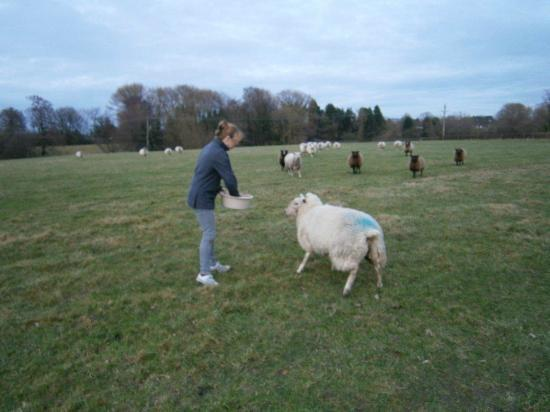 Moss Farm: Me and my well trained flock