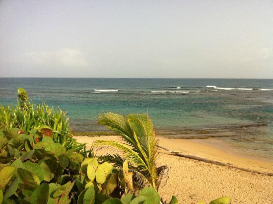 Villa Tropical Oceanfront Apartments on Shacks Beach: Reef