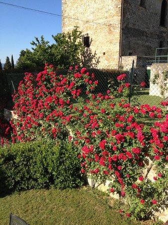 Tenuta Torre Rossa Farm & Apartments: Eleonora's roses