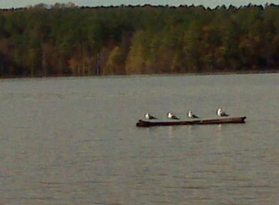 ‪‪Jordan Lake State Recreation Area‬: Seagulls at Jordan Lake