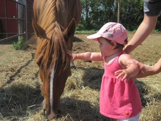 Little Pond Stables: our daughter getting up close