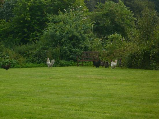 The Forest Country House B&B and Cottages : chickens at play