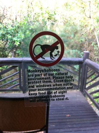 Hilltop Camp: attenti ai babbuini