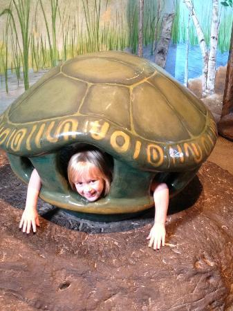 Saint Paul, MN: Being a turtle