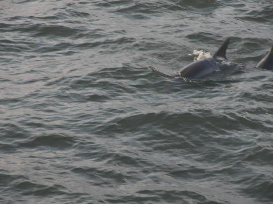 JJC Boats Inc.: Dolphins