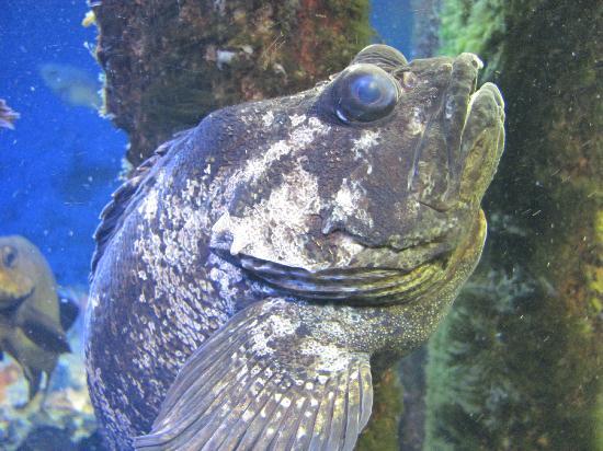 Toba Aquarium - Picture of Toba Aquarium, Toba - TripAdvisor