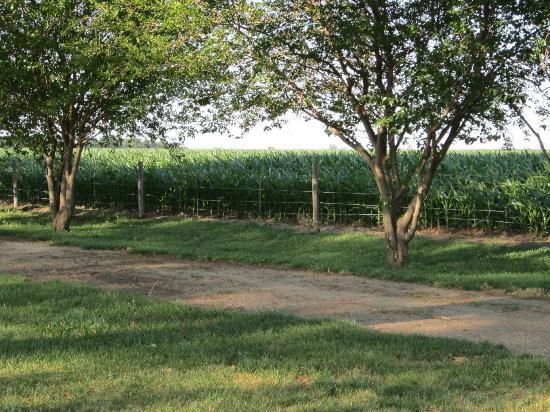 Doniphan, NE: Surrounded by rows of trees and cornfields....