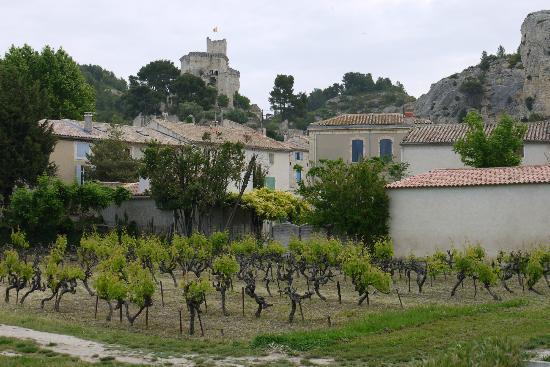La Bastide de Boulbon: Vineyard in town (Boulbon)
