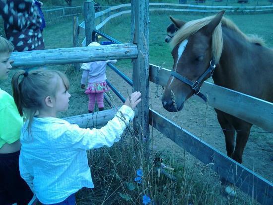 Plum Loco Animal Farm: Pony