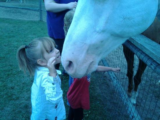 Plum Loco Animal Farm: Horse