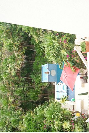 Casa Amor Del Sol : View of pool area and garden walkway - taken from our private balcony
