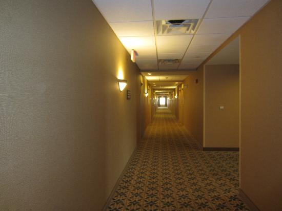 هامبتون إن ناشوا: Hallway