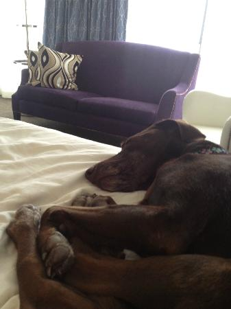 Kimpton Topaz Hotel: Libby loves the Topaz beds!