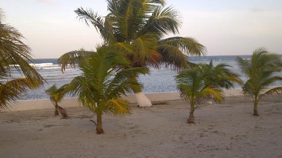 Blue Marlin Beach Resort: View from porch